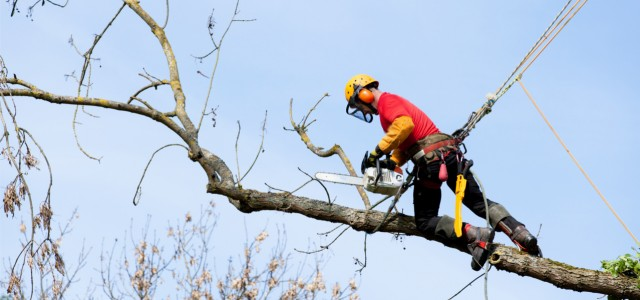 Tree Surgeon, Doncaster, South Yorkshire