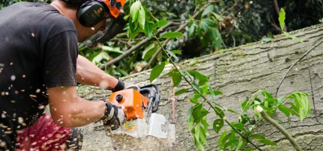 Tree Surgery – Sheffield, South Yorkshire