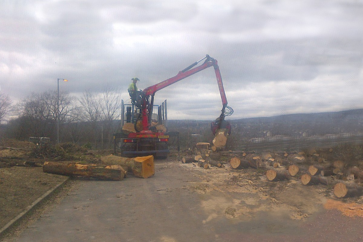 Tree surgeon, tree surgery, tree removal, tree clearance and removal