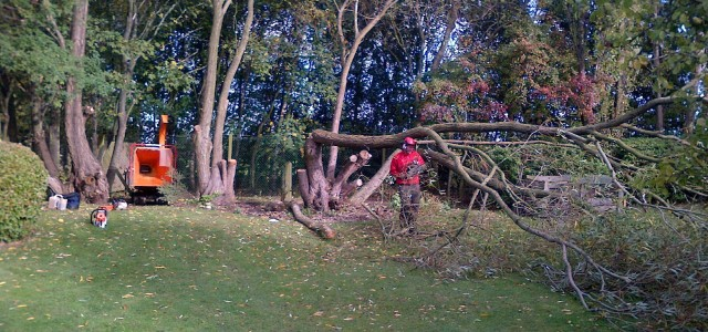 Domestic Tree Surgery Service for