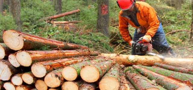 Commercial, Professional Tree Contractor